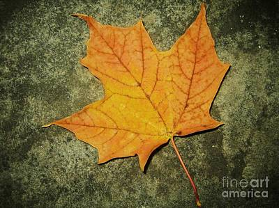 Photograph - Autumn by Reb Frost