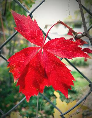 Photograph - Autumn Red by Brad Hodges
