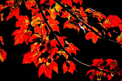 Photograph - Autumn Red by Francisco Gomez