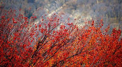 Solano's Autumn Red Art Print by Josephine Buschman