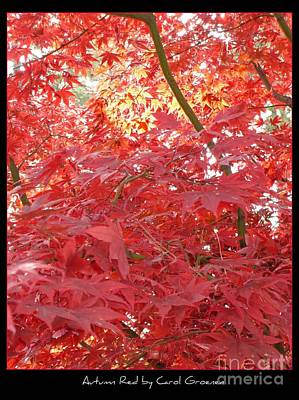 Photograph - Autumn Red Poster by Carol Groenen
