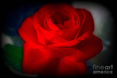 Photograph - Autumn Red Rose by Kay Novy