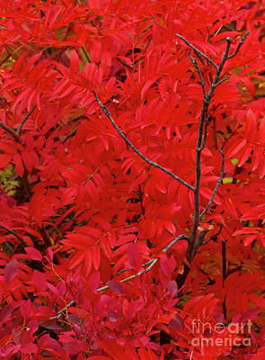Photograph - Autumn Red-signed-#7285 by J L Woody Wooden