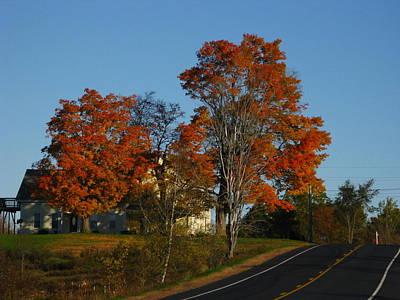 Photograph - Autumn Reds by Bill Tomsa