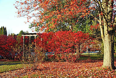 Photograph - Autumn Reds by Debbie Oppermann