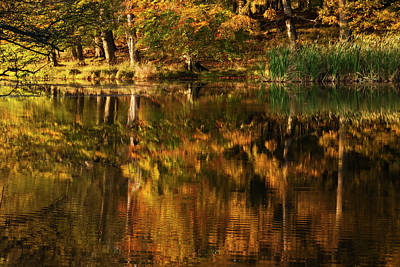 Photograph - Autumn Reflections - 365-191 by Inge Riis McDonald