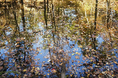 Photograph - Autumn Reflections by Dennis Hedberg