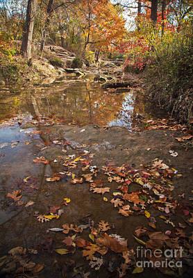 Autumn Reflections Art Print by Iris Greenwell