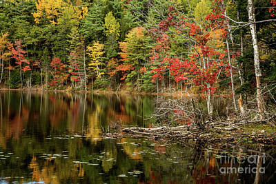 Photograph - Autumn Reflections by Karin Pinkham