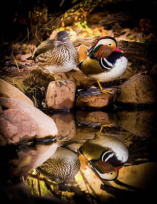 With Red Photograph - Autumn Reflections - Mandarin Ducks by TL Mair