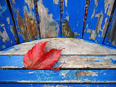 Photograph - Autumn Rest by Rod Stewart