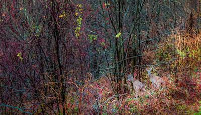 Two Deer Photograph - Autumn Ridge by Karen Wiles