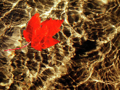 Photograph - Autumn Ripples by Rod Stewart
