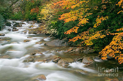 Photograph - Autumn River Cascades I by Clarence Holmes