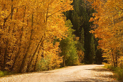 Photograph - Autumn Road by James BO  Insogna