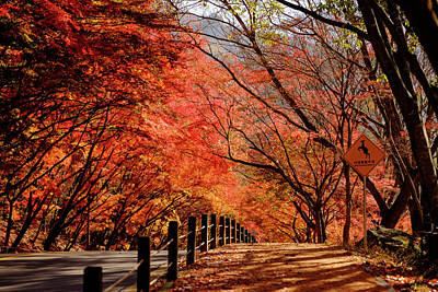 Photograph - Autumn Road by Roy Cruz