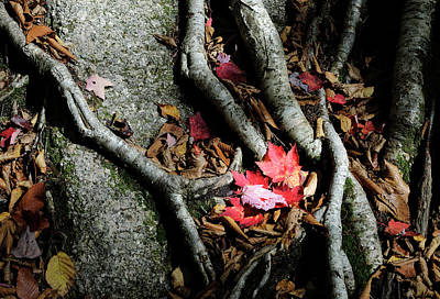 Photograph - Autumn Roots by Luke Moore