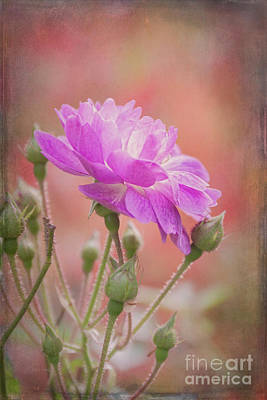 Photograph - Autumn Rose by Elaine Teague