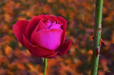 Art Print featuring the photograph Autumn Rose by Isabella F Abbie Shores FRSA