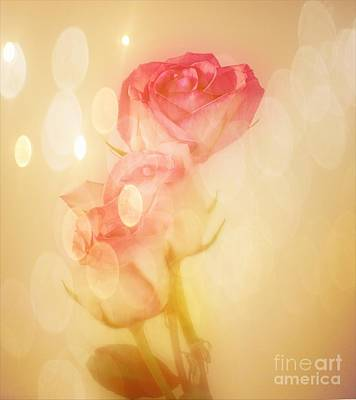 Photograph - Autumn Roses by Shirley Mangini