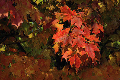 Photograph - Autumn Rush by Don Spenner