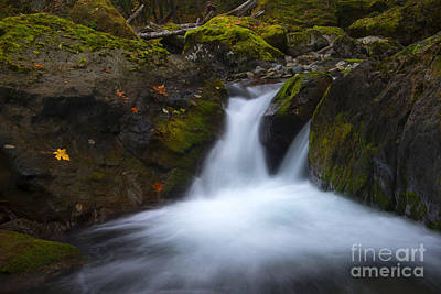 Skate Creek Photograph - Autumn Rush by Mike Dawson