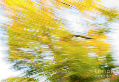 Photograph - Autumn Rush by Tim Gainey