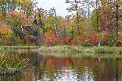 Photograph - Autumn Sandhill Crane by Patti Deters