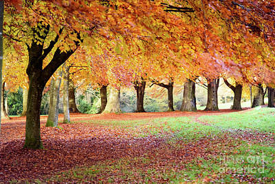 Photograph - Autumn Scene by Colin Rayner