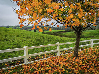 Photograph - Autumn Scene In The Irish Countryside by James Truett