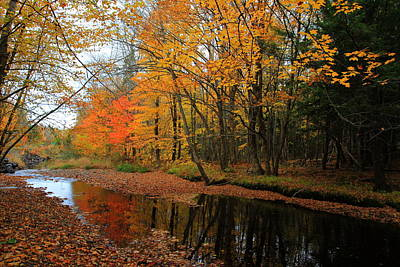 Photograph - Autumn Scene by Kathleen Sartoris