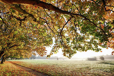 Overhang Photograph - Autumn Scene With Overhanging Trees by Simon Bratt Photography LRPS