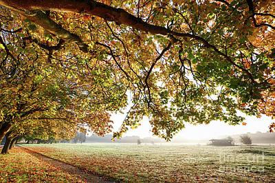 Autumn Scene With Overhanging Trees Art Print