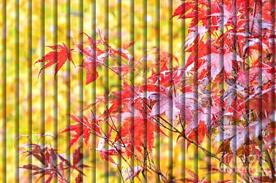 Photograph - Autumn Screen Of Red And Yellow by Debra Martz
