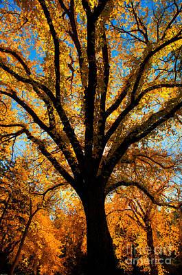 Photograph - Autumn Season 4 by Terry Elniski
