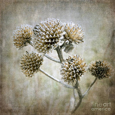 Photograph - Autumn Seed Heads II by Tamara Becker