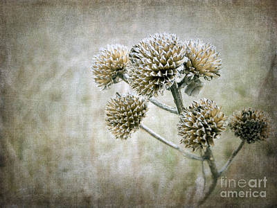 Photograph - Autumn Seed Heads IIi by Tamara Becker
