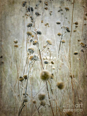 Photograph - Autumn Seed Heads by Tamara Becker