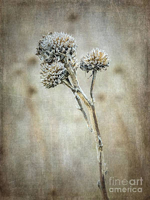 Photograph - Autumn Seed Heads V by Tamara Becker