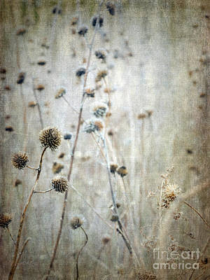 Photograph - Autumn Seed Heads Vi by Tamara Becker