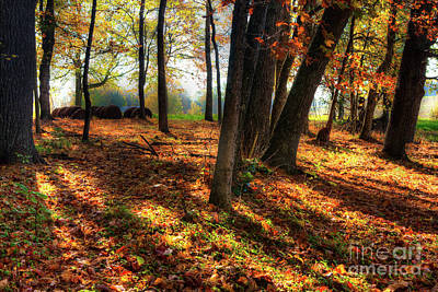 Photograph - Autumn Shadows In The Blue Ridge by Dan Carmichael