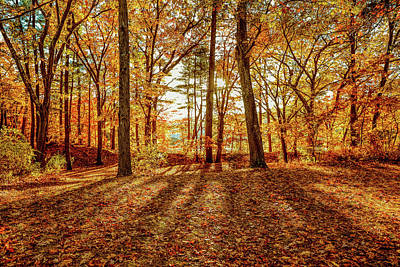 Photograph - Autumn Shadows by Lilia D