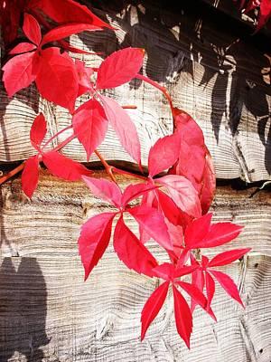 Autumn Shadows Art Print by Lucia Del