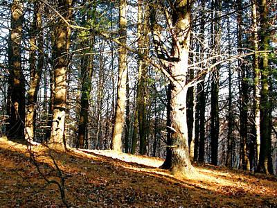 Painting - Autumn Shadows by Paul Sachtleben