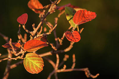 Photograph - Autumn Shining by Crystal Hoeveler