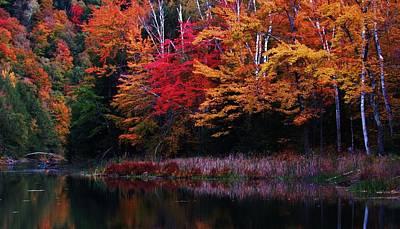 Photograph - Autumn Shore by Todd Rojecki