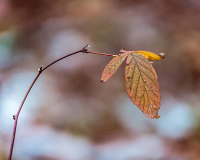 Photograph - Autumn Simplicity by Chris Bordeleau