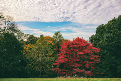 Rural Landscapes Photograph - Autumn Skies by Jessica Jenney