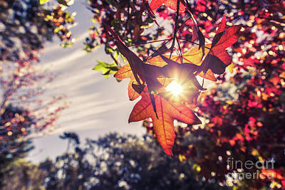 Photograph - Autumn Sky And Colorful Leaves In Fall Season With Sun Shine On  by Jingjits Photography