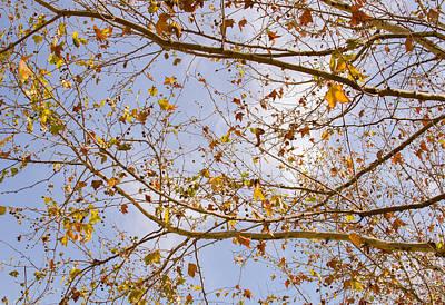 Photograph - Autumn Sky by Andrea Mazzocchetti